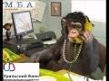 МБА Финансы 7. Коллекторы. Звонок должнику