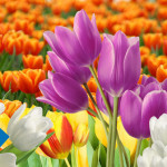 Цветочный гид от WebMoney к 8 марта